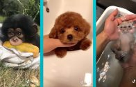 The-Cutest-Animals-on-Tik-Tok-Amazing-Pet-Tricks-Exotic-Creatures